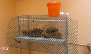 Hi tech poultry cages - 7 hen.