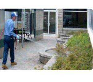 Pest Control Management Services in Noida Noida