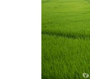 60 cents crop land for sale at iragavaram