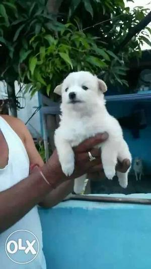 We have all breed puppies are available good