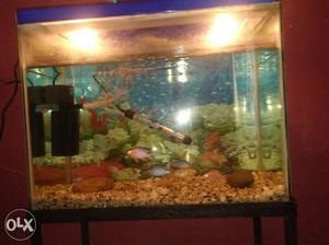 Imported fishes chichleds and jewels 8 fishes.(1