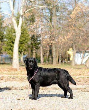 Dog Training New Era..