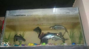 Silver And Black Fishes