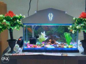 Gray And Blue Fish Tank