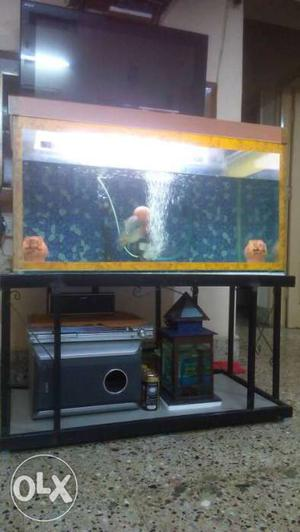 Flower Horn Fish With Tank And Top With Stand