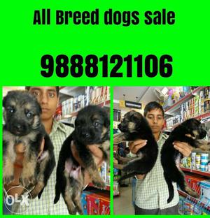 Tip Top kennel all pets available in jalandhar