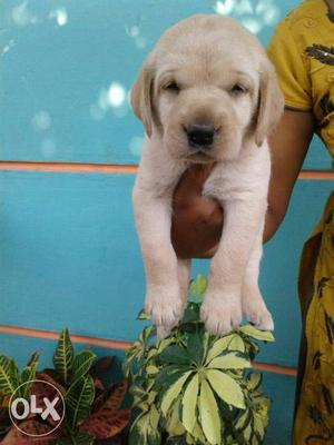 All breed Puppies available at reasonable price