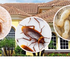 Biochem pest control,Tanjore Thanjavur