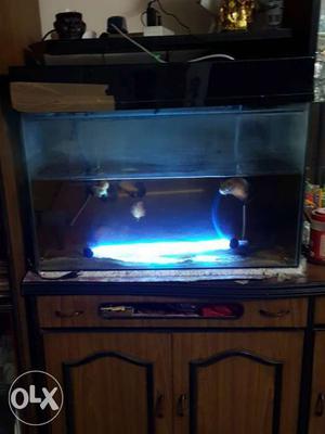 Fishes Aquarium Three Fishes