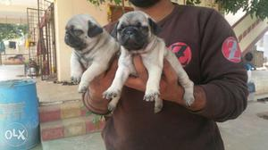 Adorable All Type Of Puppies Available At