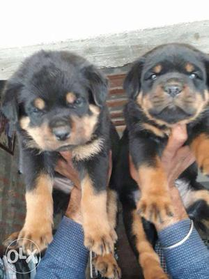 All types breed puppies available