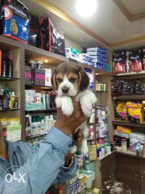 Amazing pet shop pet shop offer show quality with
