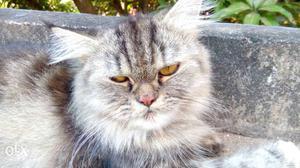 healthy cat litter reviews