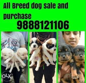 All breed dogs German Shepherd pug Rottweiler