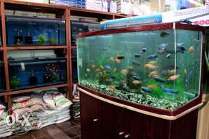 New Fish Aquarium Store Open In Banaswadi Kasturinagar