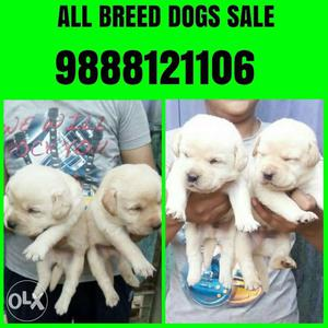 Tip Top kennel all breed dogs available in