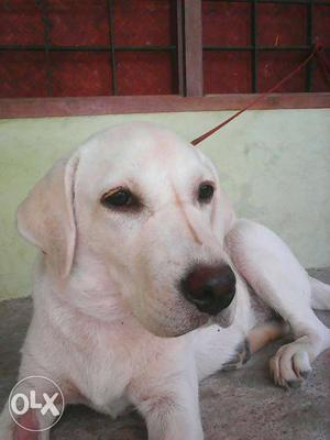5 month gud quality puppy north paravoor