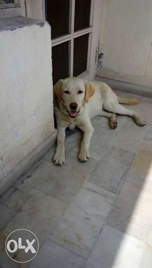 Lebra dog female 6 month old.price fix