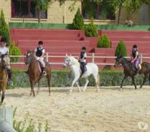 Avail best Horse riding course in Pune Maharashtra Pune
