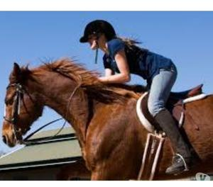 Best Horse riding training in Pune Pune