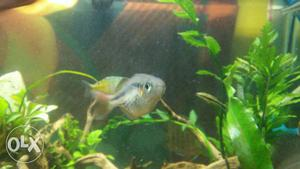 Exotic rainbow fish for sell