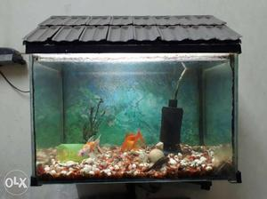 Fish Tank with 03 fish for sale with air bubble