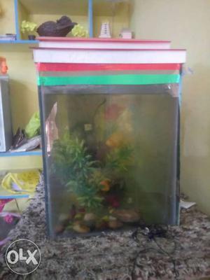 Fishes with aquarium 3 parrats 1 cat fishes &