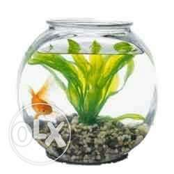I want to buy this type of fish bowl if anyone