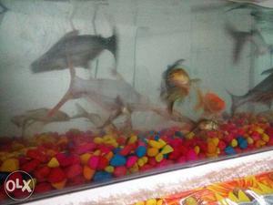 Total Fish:- 14. / 5 big fish,2 midium fish,7