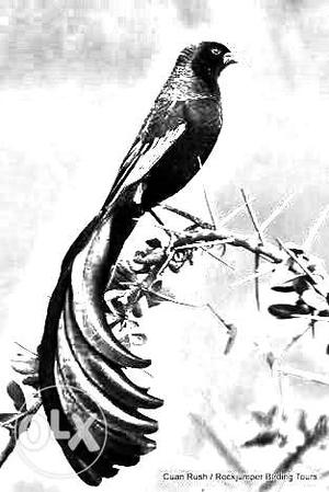 Illustration Of Bee Eater