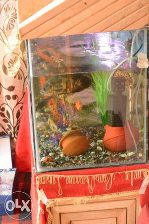 I want to sell my aquarium. interested person can