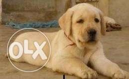 Big Sale on Quality Dogs
