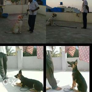 Dog training availble