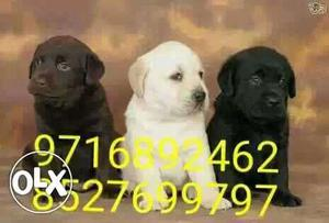 Lest price best quality ** All types of dogs