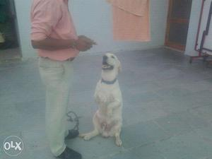 Contact for your dog training in jaipur by 16