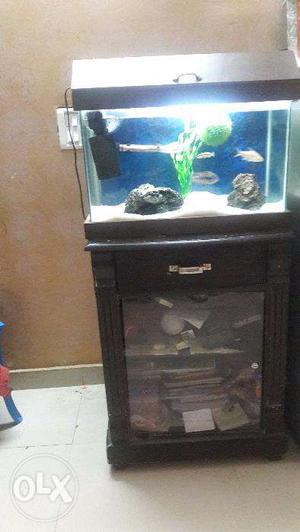 Customized Aquarium with Fish ( Inch)