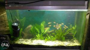 3 fit planted fish tank..its imported iteam..with