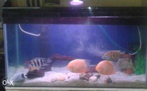 Six Juvenile Cichlid Assorted Fish for SALE