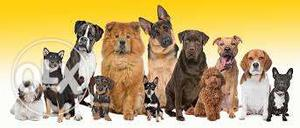 All Dog breed available full low price (Dj Dog