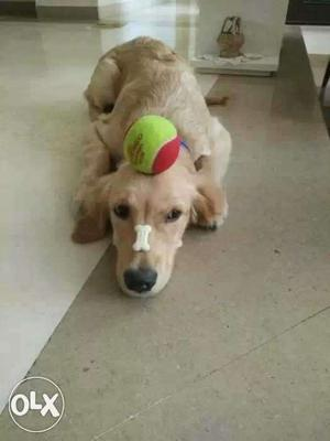 Dog training for in Delhi NCR