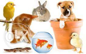 All kinds of pets available in a cheap rate, delivery is