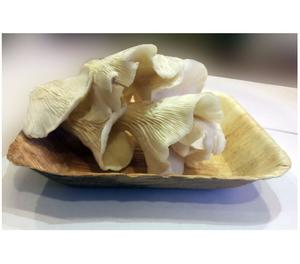 Buy Oyster Mushroom Online at Best Price in India Greater