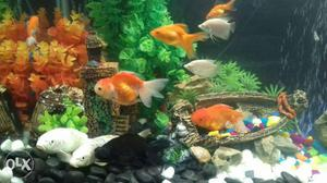 All types of aquariam and fishes for sale in the