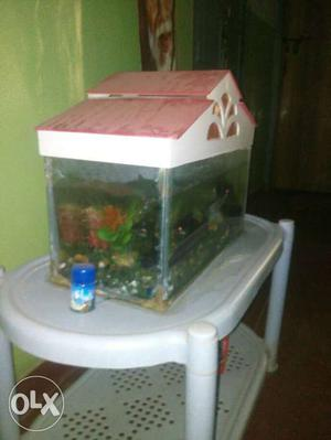 Fish tank, motor, fish food, along with 3 shark
