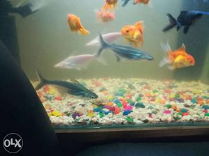 7 to 8 inch shark fish for 100rs, two black and
