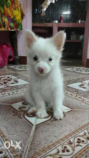 Puppies grown with very good hygiene environment.