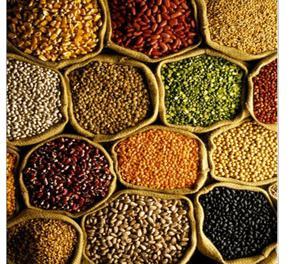 Fried peas wholesalers in India Thoothukudi