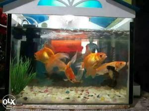 Fish Aquarium for sale at very low price.. 2 Gold