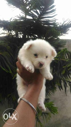 Best quality healthy puppies at best price ready