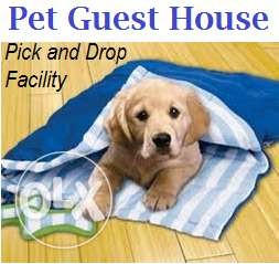 Day boarding for all kind of pets.. We give